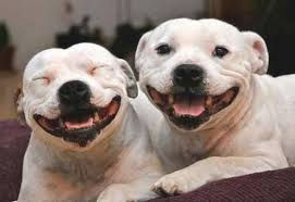 smiling dogs.