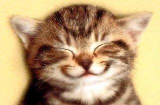 smiling smug cat