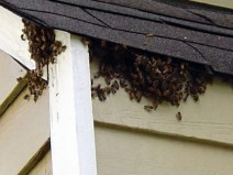 bees_roof_acworth